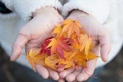一位小姐举行的红槭叶子 免版税库存照片