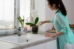 一位年轻主妇在房子的厨房里倾吐从一杯的一朵兰花在窗台的一个罐 库存照片