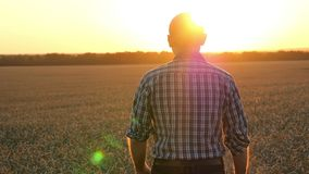一位年轻农夫是在遇见日落的麦田 农业和事务 一个美好的风景的一个人 影视素材