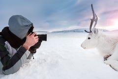一位年轻摄影师射击说谎在雪的一头白色和逗人喜爱的鹿 非常寒冷 俄罗斯,西伯利亚, Yamal 图库摄影