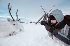 一位年轻摄影师射击说谎在雪的一头白色和逗人喜爱的鹿 非常寒冷 俄罗斯,西伯利亚, Yamal 免版税库存图片