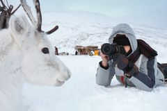 一位年轻摄影师射击说谎在雪的一头白色和逗人喜爱的鹿 非常寒冷 俄罗斯,西伯利亚, Yamal 库存图片