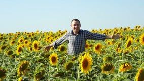 一位愉快的人农夫横跨向日葵领域慢慢地移动 股票录像