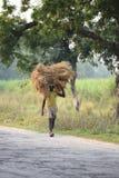 一位未认出的农夫运载从农厂家的米 库存照片