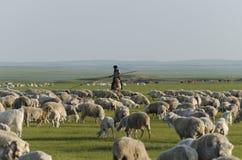 一位牧羊人和他的牧群在内蒙古 免版税库存图片