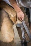 一位钉马掌铁匠的细节在工作 免版税库存照片