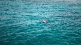 一位难区分的轻潜水员辅导员给方向实习生 影视素材