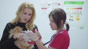 一俏丽的年轻女人的画象有一条小狗的在她的胳膊和一位兽医有一个听诊器的在兽医 影视素材