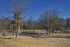 一冷的冬天`在公园的s Dat 免版税库存照片