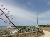一切在葡萄牙-阿尔加威南部  免版税库存照片