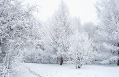 一切用雪盖 美妙的圣诞树和欢乐心情 免版税库存照片