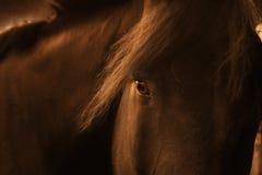 一匹嬉戏的农厂马的晚天画象 库存照片