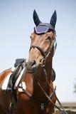 一匹嬉戏跳跃的马的顶头射击 免版税库存图片