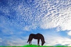 一匹孤立马在草甸 库存图片