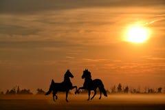 一匹孤立马在草甸 免版税库存图片