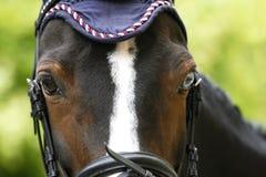 一匹幼小聪明的跳跃的马的画象反对绿色自然b的 免版税库存图片