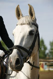 一匹幼小马的顶头射击特写镜头在展示跳跃的事件的 免版税库存照片