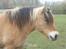 一匹棕色农厂马的头在草甸 免版税库存图片