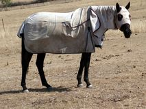 一匹殷勤马在小牧场 库存图片