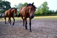 一匹滑稽的马的照片 免版税库存照片