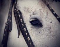 一匹灰色马的眼睛 免版税库存照片