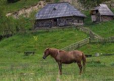一匹穿着考究的马在草甸吃草 免版税库存图片