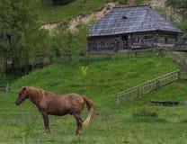 一匹穿着考究的马在草甸吃草 免版税库存照片