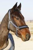一匹美丽的幼小公马的侧视图画象在动物农场的 免版税库存照片