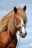 一匹美丽的马的画象 图库摄影