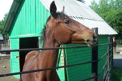 一匹美丽的马 免版税库存图片