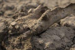 一匹老马的古老遗骸 千福年的骨头动物 免版税库存照片