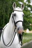 一匹良种马的画象在美丽的动物农场的 库存照片