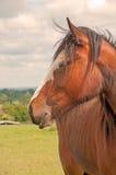 一匹被注视的马 免版税库存图片