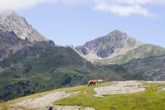一匹马和一只驹在山在Ayous湖 免版税库存图片