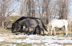 一匹马在一个牧场地在冬天 免版税库存照片