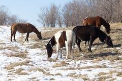 一匹马在一个牧场地在冬天 免版税库存图片