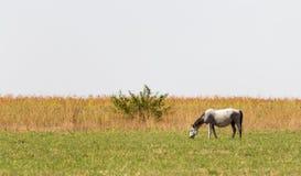 一匹马在一个牧场地本质上 免版税库存图片