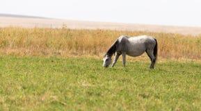 一匹马在一个牧场地本质上 图库摄影