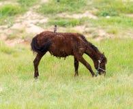 一匹马在一个牧场地本质上 库存照片