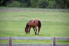 一匹马在一个被操刀的牧场地 免版税库存图片
