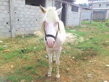 一匹马在充分的城市 免版税库存照片