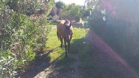 一匹马在围场 免版税库存图片