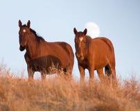 一匹马在日落的一个牧场地 库存照片