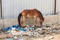 一匹马在泰国在废物站立 免版税库存照片