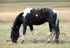一匹马在牧场地 库存照片