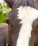 一匹马在牧场地 库存图片