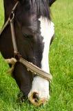 一匹马在牧场地 免版税库存照片
