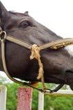 一匹马在牧场地 免版税库存图片