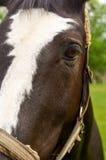 一匹马在牧场地 图库摄影