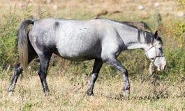 一匹马在秋天的一个牧场地 免版税库存图片